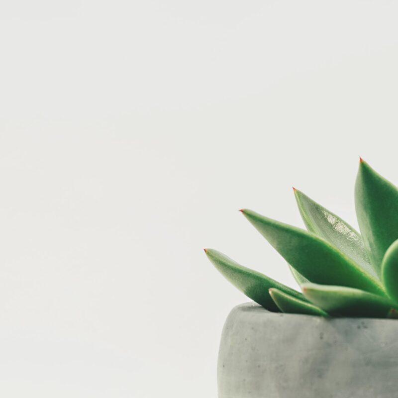 Two Ways To Encourage Growth